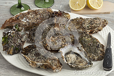 Pacific Oysters Growing On Rock In The Ocean. Stock Photo.