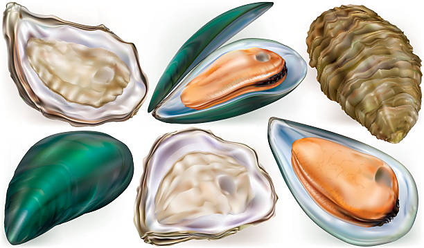 Pacific Oyster Clip Art, Vector Images & Illustrations.