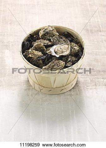 Stock Photograph of Pacific oysters of the variety Kelly Gigas in.