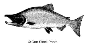 Pacific salmon Illustrations and Clipart. 41 Pacific salmon.