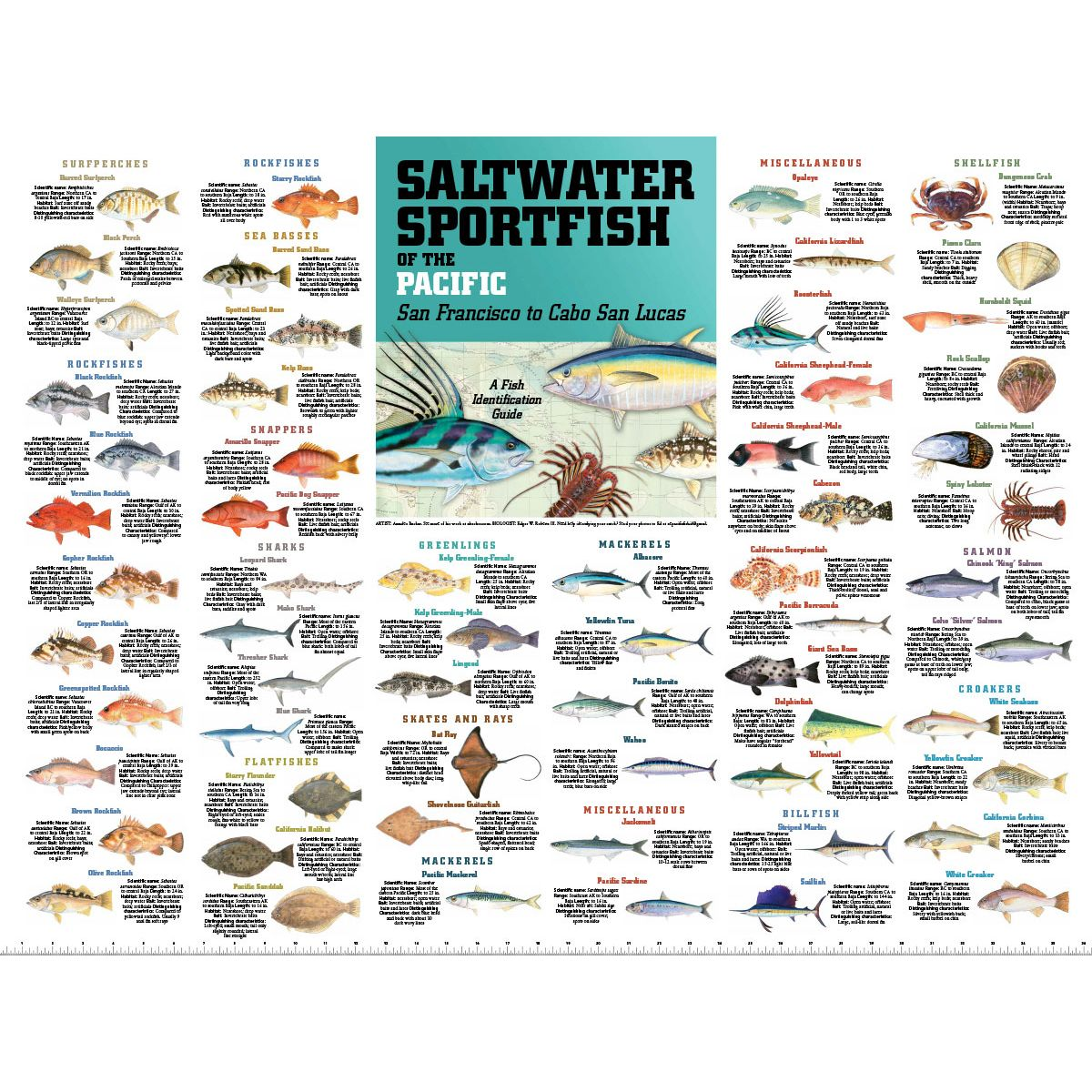 Saltwater Sport Fish of the Pacific: San Francisco to Cabo San.