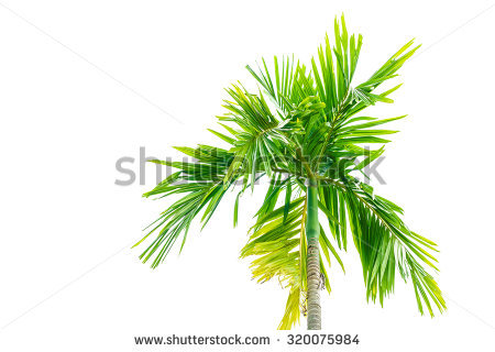 Pacific yew clipart 20 free Cliparts | Download images on ...
