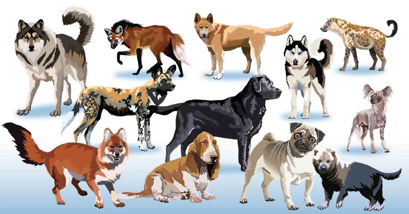 Pack of dogs clipart » Clipart Station.