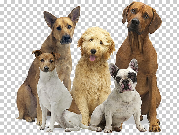 1,481 pack Of Dogs PNG cliparts for free download.