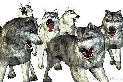Pack Of Wolves Clipart.