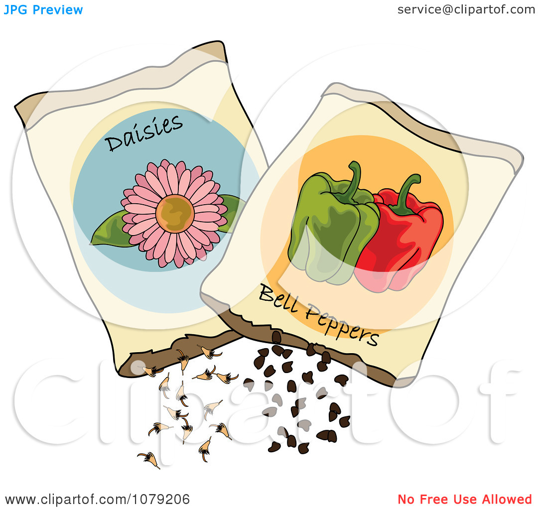 Clipart Packets Of Daisy Flower And Bell Pepper Seeds.