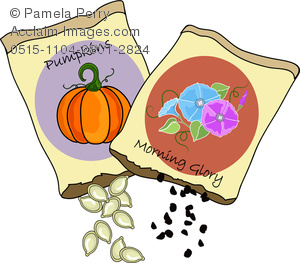 Clip Art Image of Pumpkin and Morning Glory Seed Packets.