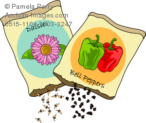 Watermelon Seed Packet Clip Art.