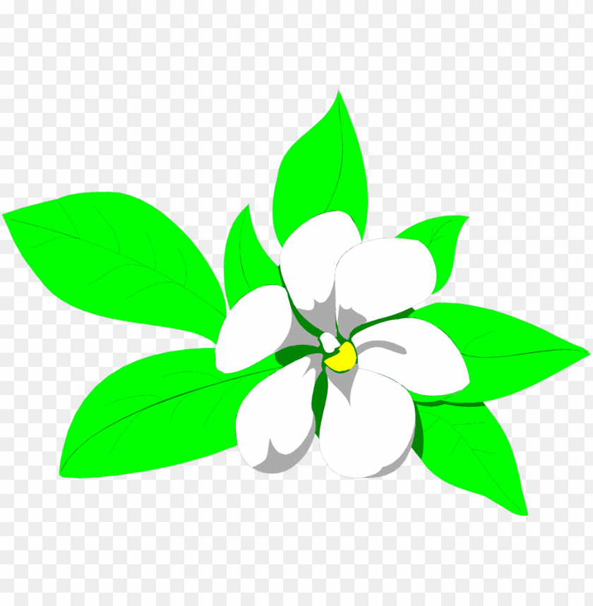 sampaguita drawing at getdrawings.