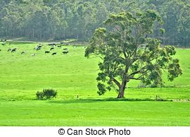 Cow paddock Stock Photo Images. 1,070 Cow paddock royalty free.