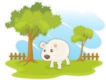 Sheep Paddock Stock Illustrations.