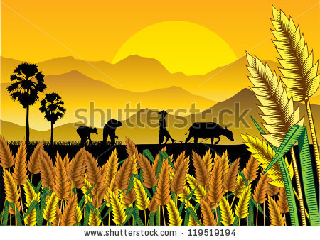 Rice Field Clipart Clipground