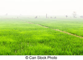 Paddy fields Stock Photo Images. 19,256 Paddy fields royalty free.