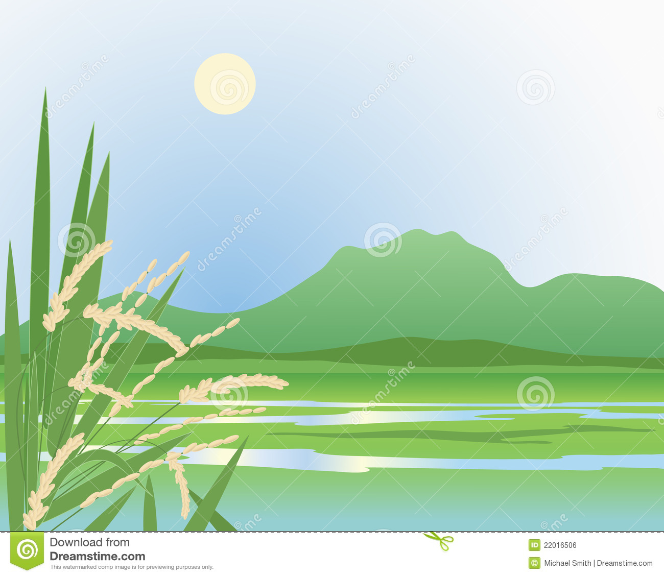 Paddy Field Stock Illustrations.