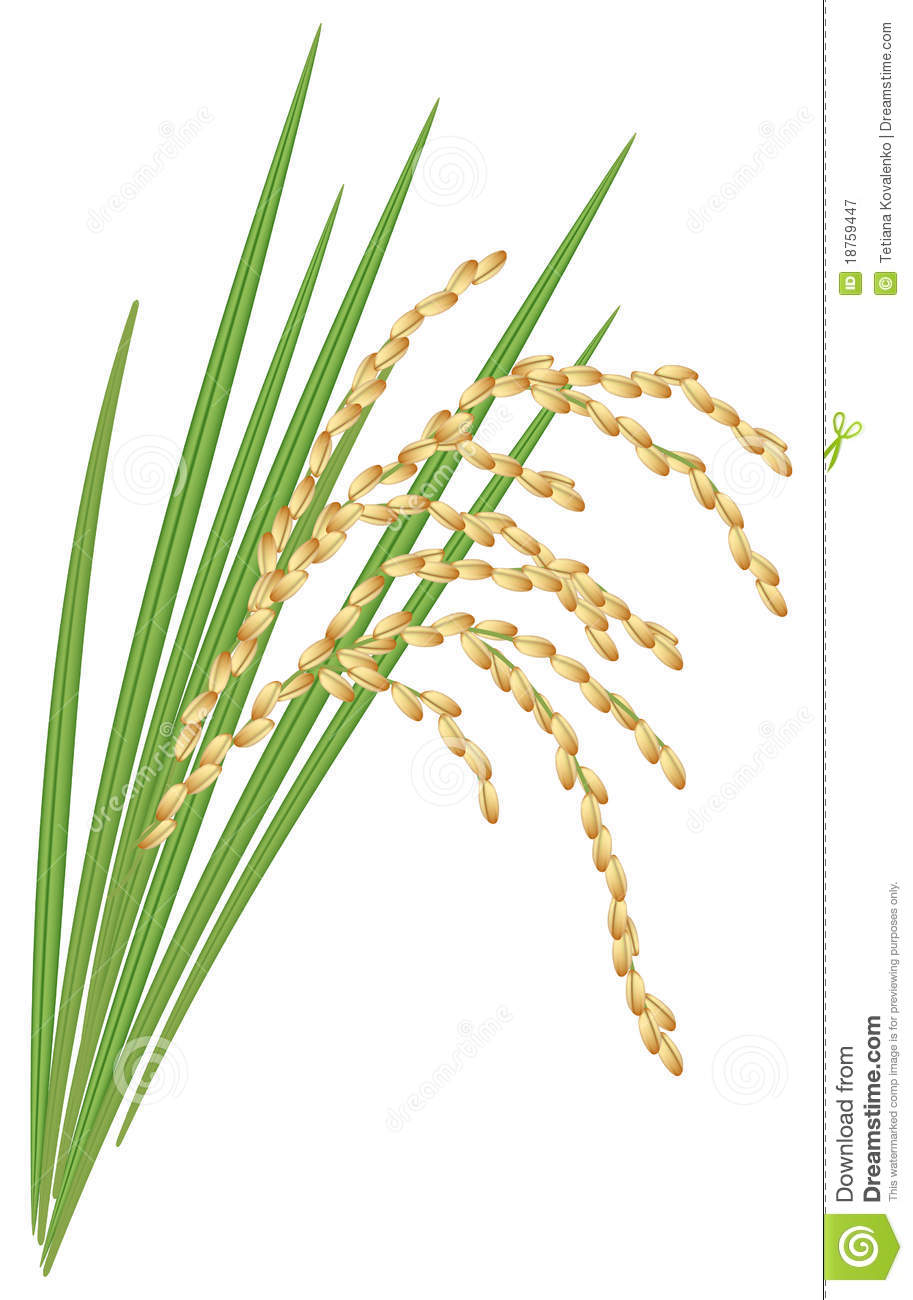 Rice plant clipart - Clipground