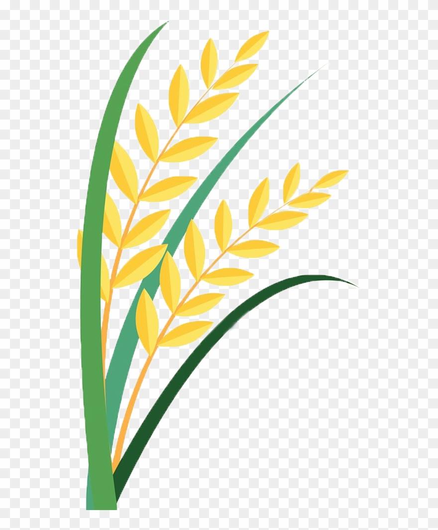 Grain Clipart Paddy.