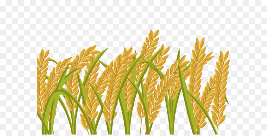 Paddy Crop Png & Free Paddy Crop.png Transparent Images.