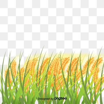 Paddy Png, Vector, PSD, and Clipart With Transparent.