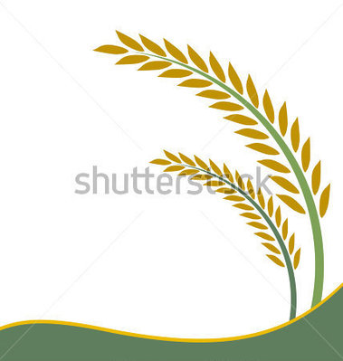 Paddy plant clipart.
