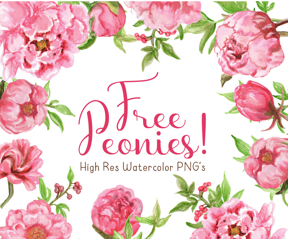 Peonies clipart 20 free Cliparts | Download images on ...