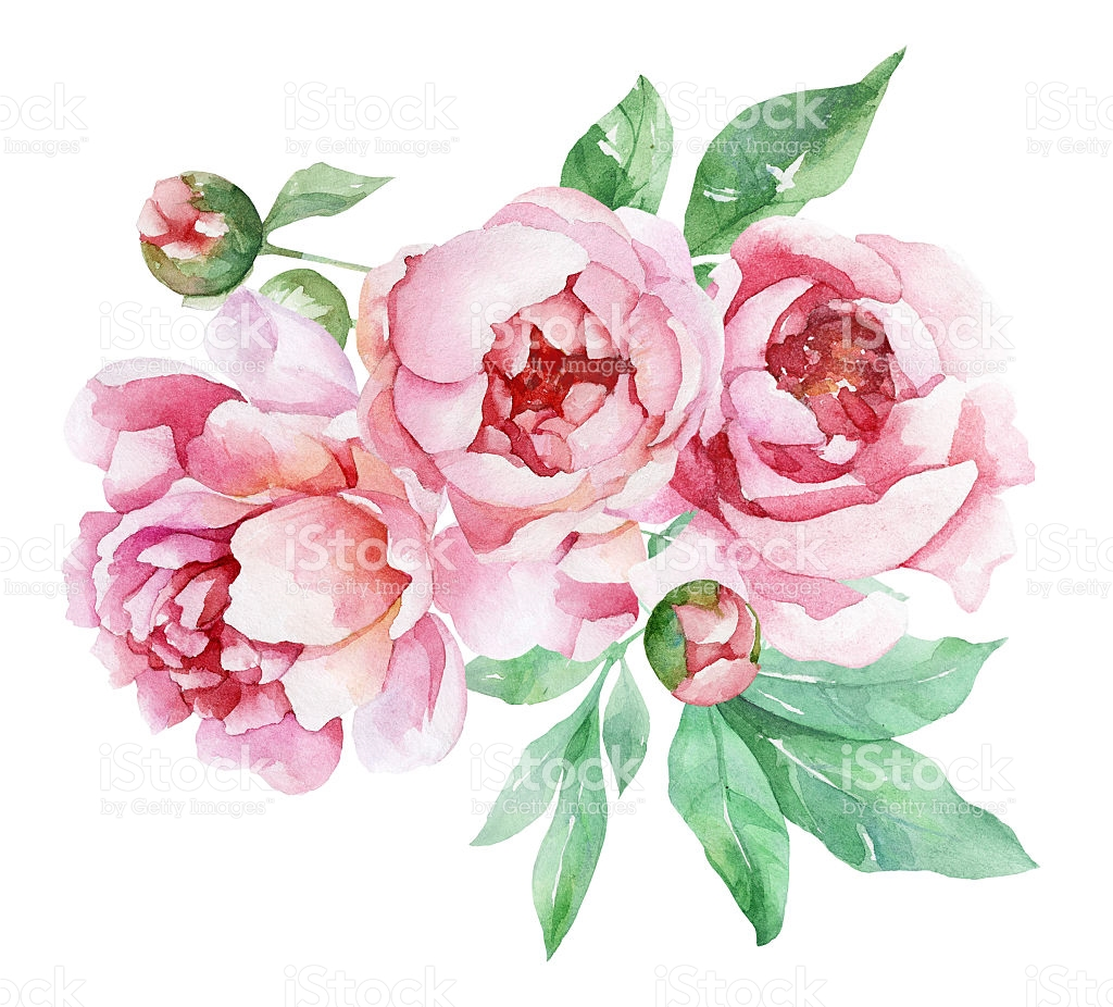 Peonies clipart - Clipground