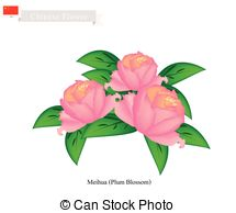 Paeoniaceae Stock Illustration Images. 5 Paeoniaceae illustrations.