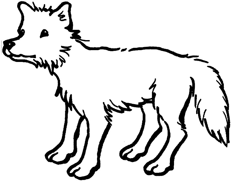 Outline Drawings Of Animals.