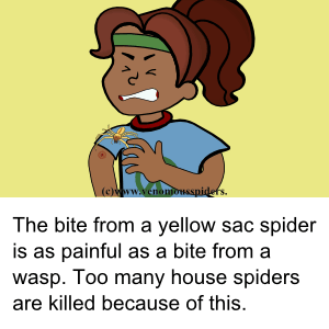 Yellow Sac Spider  common by bites and numbers!.