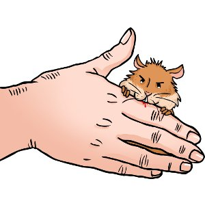 Why do hamsters bite?.
