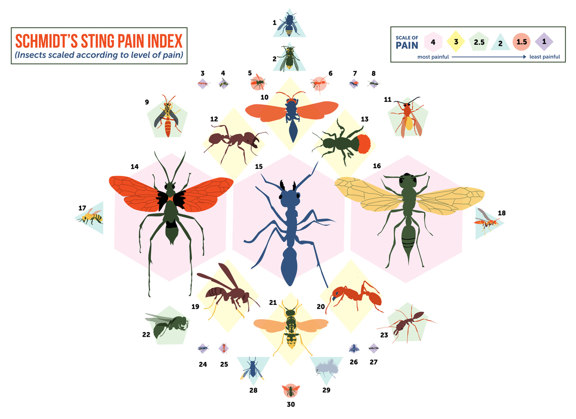 From 'Nettles' to 'Volcano,' a Pain Scale for Insect Stings.