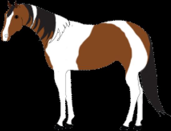 Paint Clipart Horse.