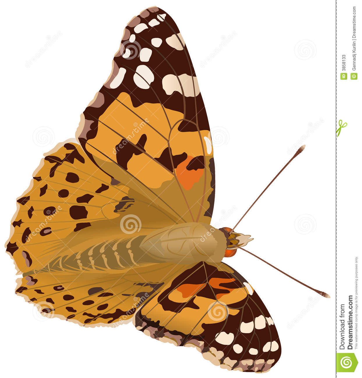 Painted Lady Butterfly Stock Illustrations.