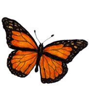 Painted lady butterfly clipart.