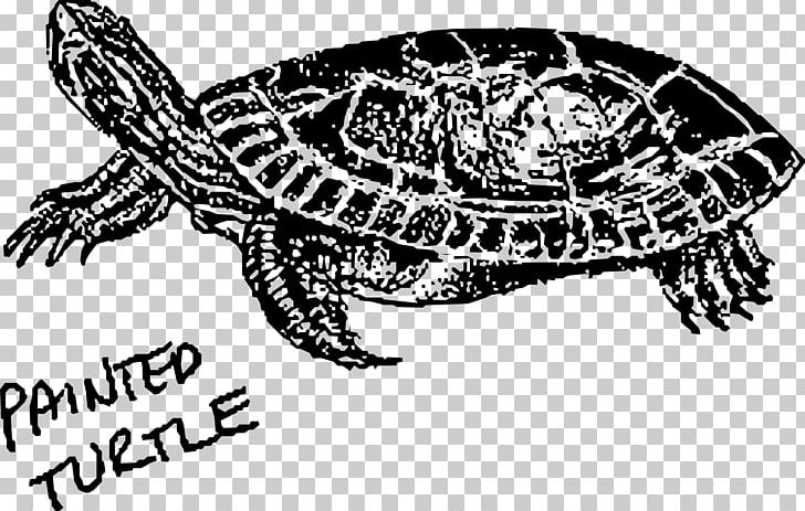 Painted Turtle Hawksbill Sea Turtle Green Sea Turtle PNG.