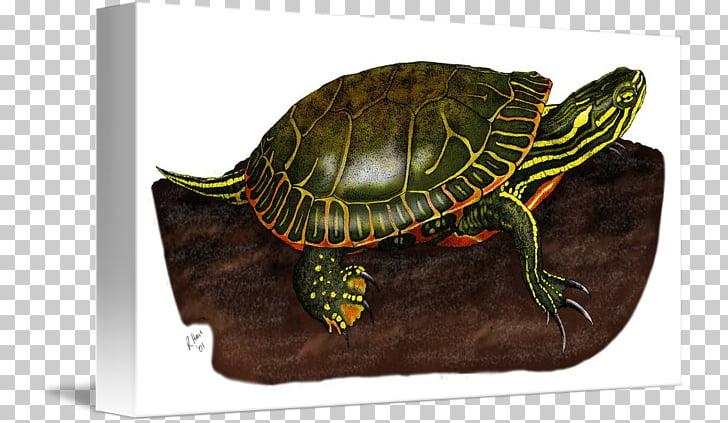 Box turtles Painted turtle Bokmärke Red panda, Painted.