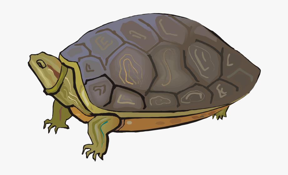 Turtle Clipart Desert Tortoise.