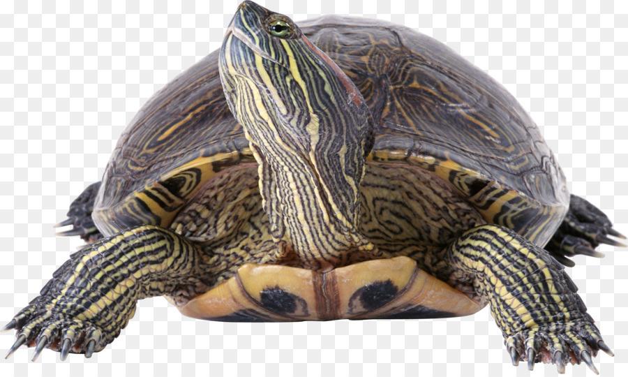 Sea Turtle Background clipart.