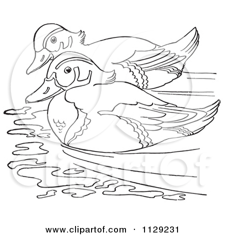 Cartoon Clipart Of An Outlined Wood Duck Pair Swimming.