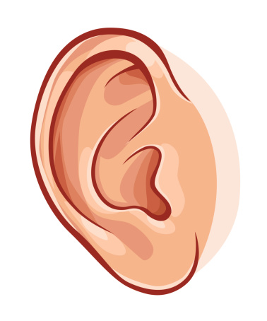 Pair Of Ears Clipart.