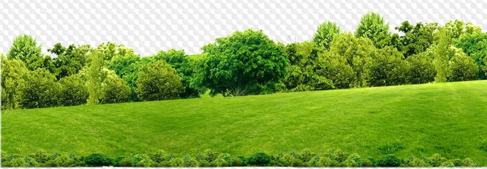 Landscape in PNG: the sea, fields, trees, rocks, grass.