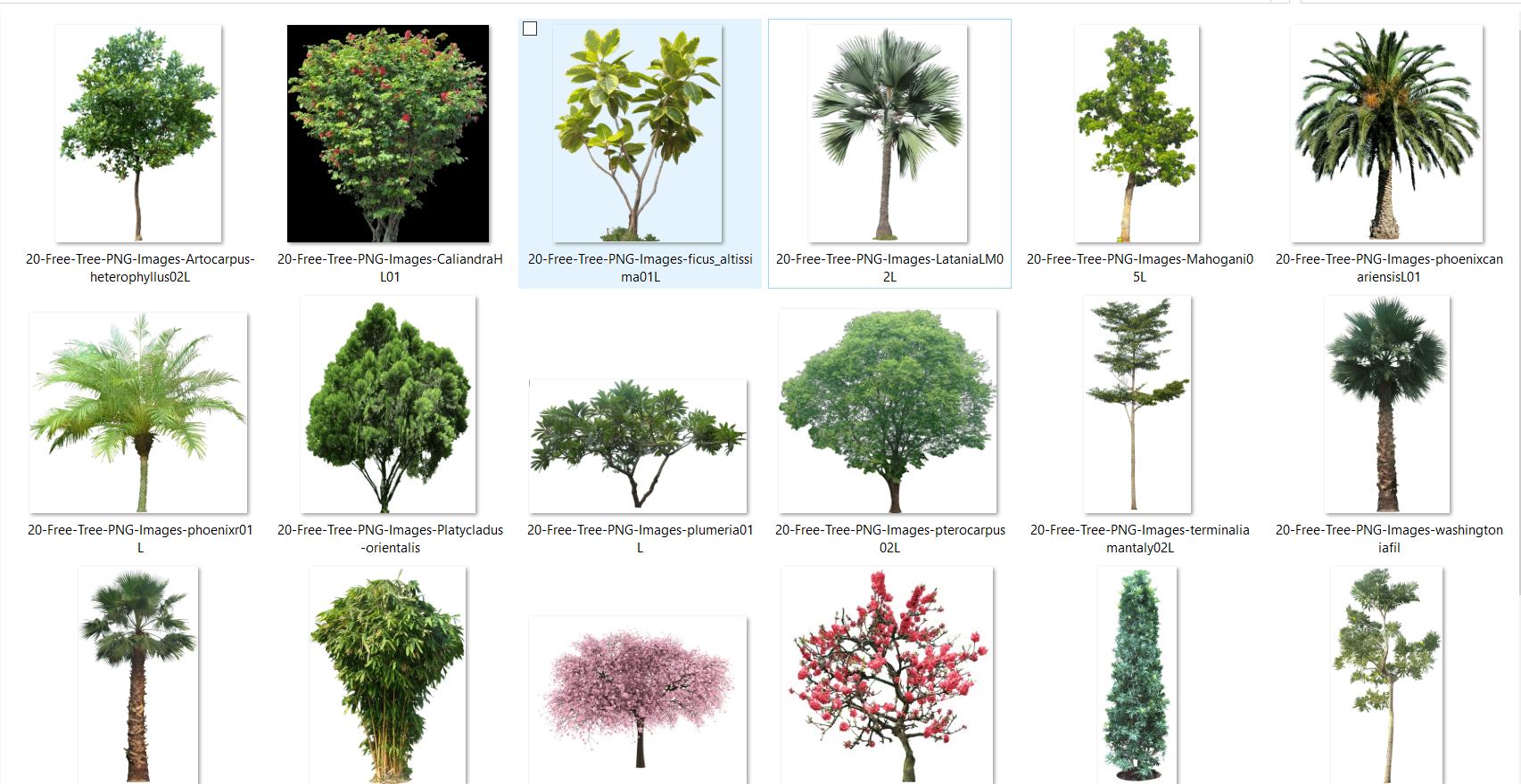 Arboles PNG para renderizado , paisaje e interiorismo y.