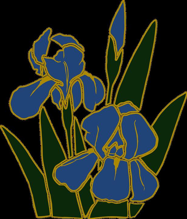 Free vector graphic: Flower, Garden, Iris, Plant.
