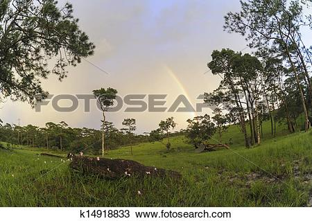 Stock Photo of Beautiful landscape after the rain in rain forest.