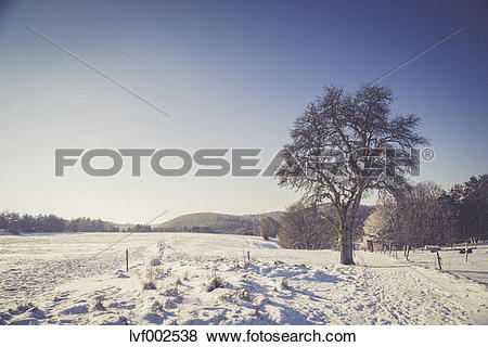 Pictures of Germany, Kaiserslautern district, Palatinate Forest.