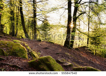 Palatinate Stock Photos, Royalty.