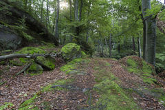 The Famous Palatinate Forest In Germany Stock Photography.