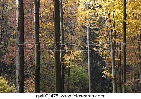 Stock Image of Germany, Rhineland.