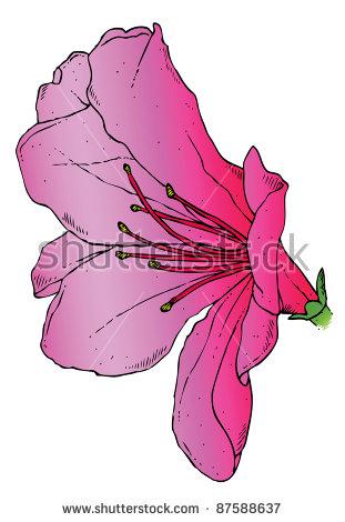 Realistic Drawing Pink Azalea Vector Stock Vector 59882608.