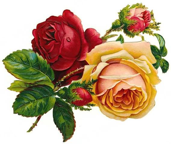 1000+ images about Graphics: Roses on Pinterest.