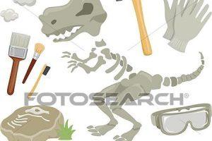 Paleontologist tools clipart 1 » Clipart Portal.